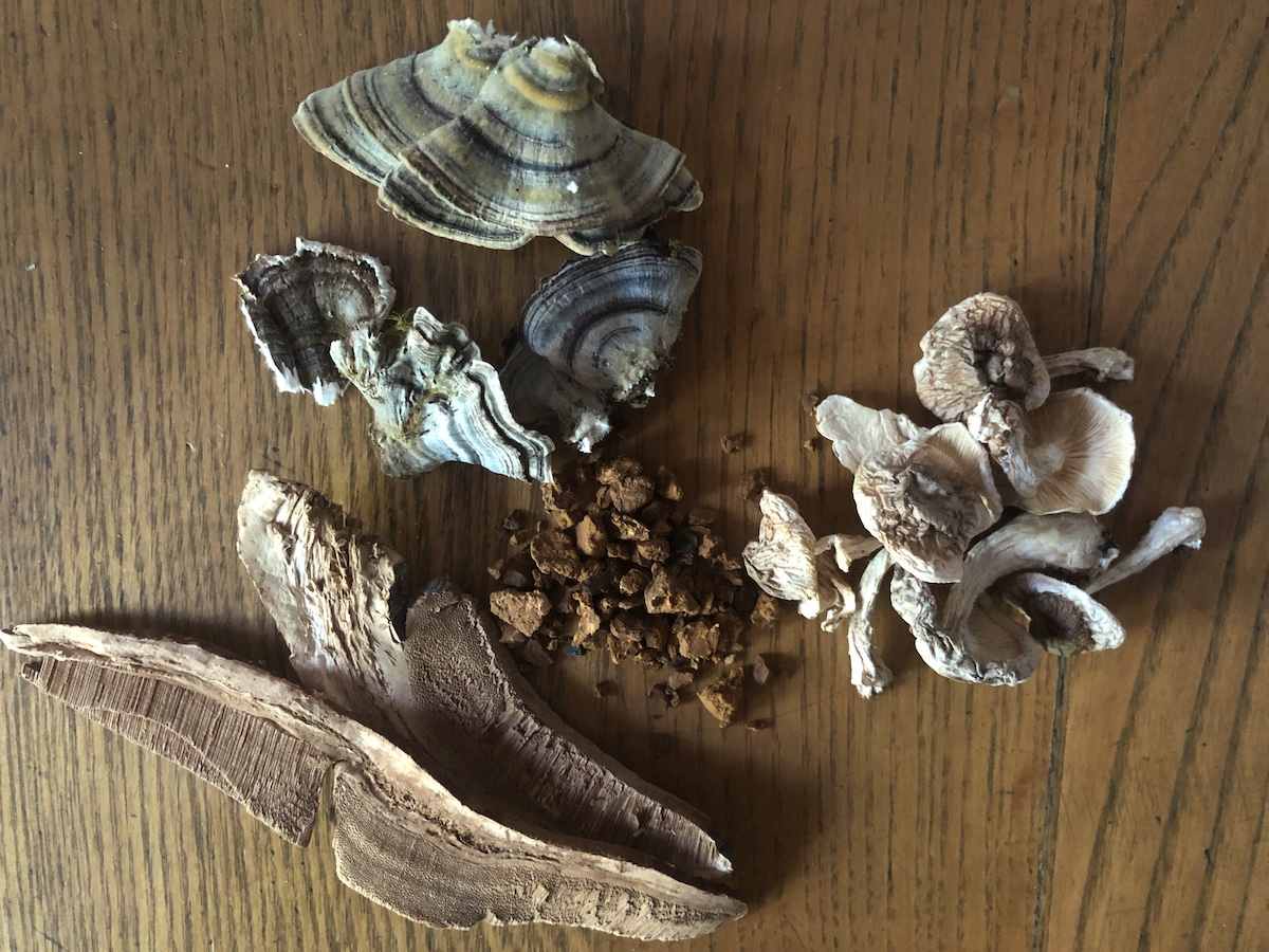 dried medicinal mushrooms