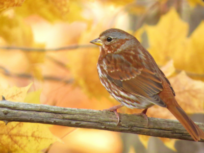 sparrow in the autumn