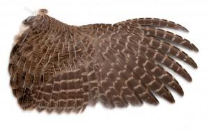 Game Bird Wing