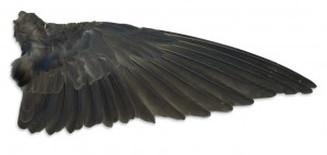 High Speed Wing