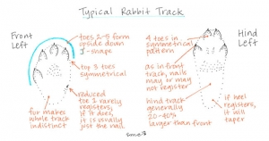 Rabbit-Track-Drawing_web