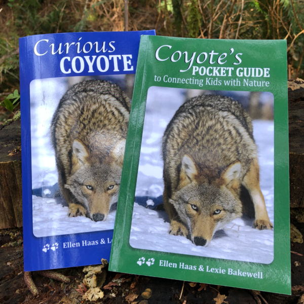 Curious Coyote Set