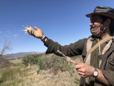 throwing cattails to the wind